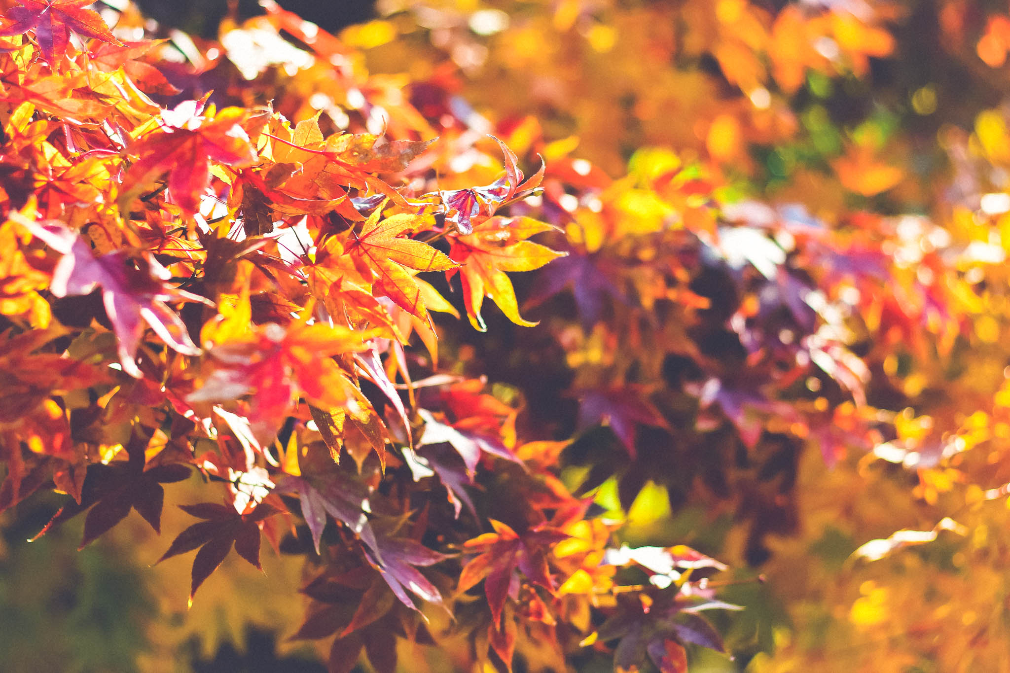 branches d'arbre, feuilles d'automne